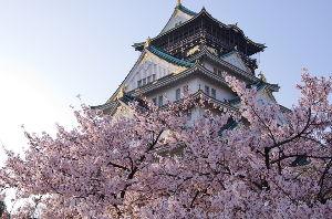 22で彼女ができたことない(。。) きれいだった~。^^ 大阪城の桜を検索したら 凄く沢山の画像があったよ。 桜ってきれいだね~。 万博