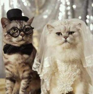 ハッピーちゃんの独り言☆ ドラマ『突然ですが明日結婚します!』を見ました◎  ヒロインにちょっかい出す取引先のキザ男と、 ヒロ