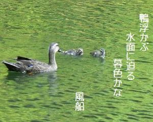 芭蕉から文月まで     「鴨」      鴨浮かぶ水面に迫る暮色かな    風船