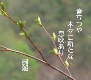 芭蕉から文月まで       [立春」        春立つや木々に新たな息吹あり    風船