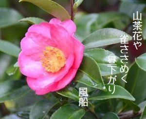 芭蕉から文月まで       「山茶花」           山茶花や雀ささめく昼下がり     風船