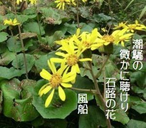 芭蕉から文月まで       「石蕗の花」       潮騒の微かに聴けり石蕗の花    風船