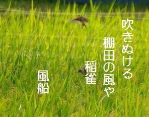 芭蕉から文月まで     「稲雀」      吹きぬける棚田の風や稲雀    風船      追ふ声のあはれに暮るれ稲