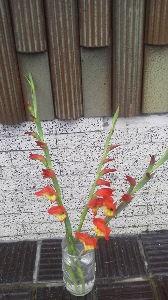 何でも OK 砂漠の満月さん 返事ありがとうございます  そう 花を育てるの大好きです  今 切ってきた グラジオ