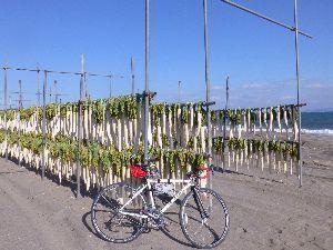 折りたたみ自転車で輪行サイクリング 今年は専ら折畳み自転車でサイクリングを楽しみましたが先日ロードバイクで三浦半島を走って来ました。 品