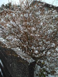 喜怒哀楽をぶつけませんか・・・ おはようございます!  今、雪片付けしてきました。  いつもに比べたら、まだまだ少ないんですが  今