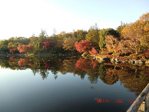 ほのぼの、お茶しながら、お話ししましょ! 長野県の大地震びっくりしました。 さよさんやトピ主の緑茶さんのお家は大丈夫でしたか?  かずさん、息