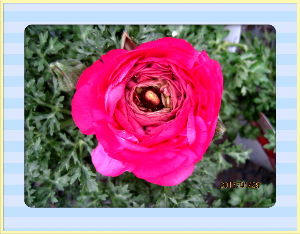 のんびり暇潰しでもしようかな・・・・・・ 連日春の陽気が続いてます・・・  種蒔きしておいたので新芽が続々発芽・・・  日当たりの良い場所に順