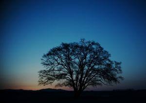 優しい風に吹かれて~ おはようございます  少し寝不足な朝  冷たい風で目が覚めました^^;   優しい風は何処へ  蒼