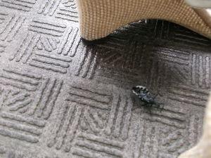 ¶第三回ムシトリ大会¶ ベランダにこんな虫がおったがぜよ  ばっちー虫やったらどうしよう(≧∀≦)