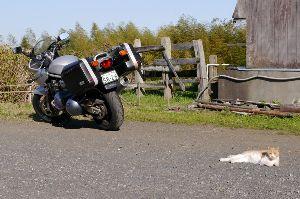 《オフ会の無いトピ》 ご無沙汰しております。  バイクは3週間前にタンデムでアクアラインを通って房総に行ってきました。茂原