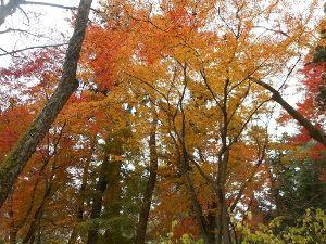 新【40代のシングルの人この指とまれ♪】 おつかれー こんばんは  最後の紅葉を見に植物園へ 走って行ける距離だけど、走れないので原付で(**