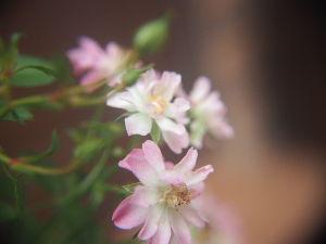 かわいい草花とアンティーク いろんな角度から何枚も撮る。
