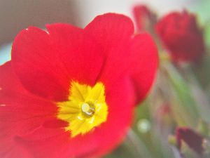 かわいい草花とアンティーク マクロレンズでグッと近づいて。