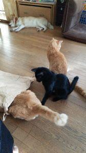 電気ガマを寝床にした黒猫 米袋に興味もち入り出す猫たちで~す。