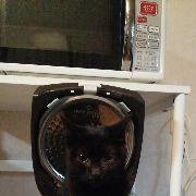電気ガマを寝床にした黒猫