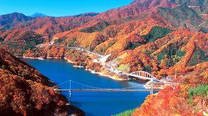 ☆金澤とことこ☆  > 私は福井なら昨年九頭竜湖で紅葉の写真を撮りましたわ。  shiさんは九頭竜湖は行かれたん