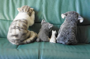 ミニチュアシュナウザー大好き! 今度は、かわいい可愛いお尻たち  右から、 エザッタ、ベー、ファビオ、Not Dog(ガウガウにはお