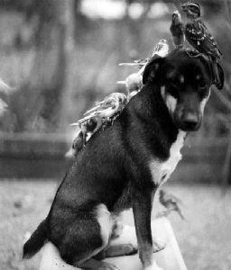 ミニチュアシュナウザー大好き! ブログ エッセイ「異種の動物たちの友情」を、アップしました。  動物と他種の動物の間にも、友情が生ま