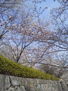 暇つぶしの・・・ もうコートはいらないよね  昨日、事務所に置いていたコートを持ち帰りました  甲府の桜は八分咲きくら
