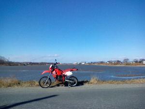 川越で こんばんは。  北風が冷たい一日でしたね。  冬枯れた伊佐沼ですが青空が綺麗でした。