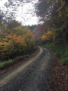 愛知県尾張発! 林道仲間募集 日曜日、昼から久しぶりに池田山に行ってきました、 只今北側では、絶賛伐採中です、新たに林道も造ってい