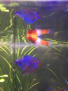 写真を撮る事が好きな関西人、珈琲をどうぞ… 調剤薬局の水槽に、初めて観た魚が泳いでいた…