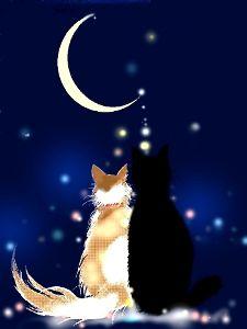 猫の夢語り ねぇ、知っていましたか?  今夜もきれいな月が見えていますが・・・ 三日月ってあるでしょ あの三日月