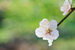 二刀流『短歌と俳句』(新・実作篇) 沙羅人さん、、、 皆さんお早うございますお元気ですか。 寒も明け立春いよいよ春ですね。梅便りも何時も