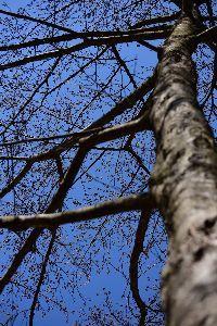 日々の事 お話しませんか? 大きな木が大好き  思いっきりくっついて見上げて あなたを独り占めにしたい・・・