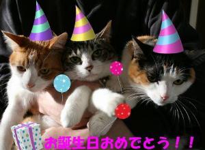 誕生日祝ってください ・