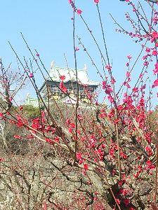 お話しをしませんか 既婚者でしたか(^。^;)汗  今、淀屋橋から歩いて大阪城まできてます(^^)
