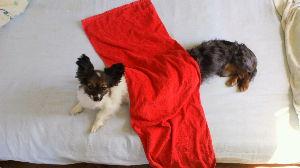 宮崎県犬友達募集 長めのお犬。