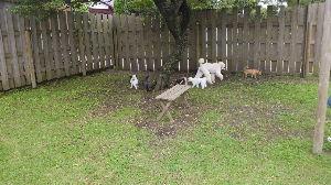 宮崎県犬友達募集 とれてた。