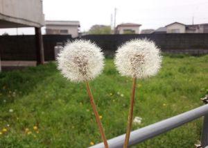 ☆おひとりさまのひとりごと☆ 熊本の地震 早く治まって欲しいと願うばかりです。 一日も早く穏やかな日がきますようにと 祈るばかりで