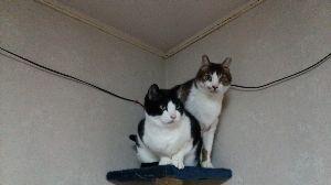 我が家のペット達です癒されて。 チョビとモンのツーショットです。