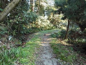 ~ON THE LINE~ 雨は止んだみたい。  太陽も出て来た。  犬の散歩、できるかな。