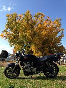 バイク乗り、ツーリング好きな面白い人w 今日は地元の 大銀杏見て来ました 秋ですね~ もう明日から12月 頑張りましょう。