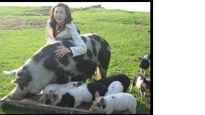 コマツ電子金属 豚歩様を労わる 61歳女性