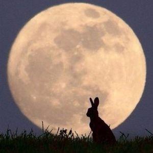 空を眺めながら こんにちは、初めまして。月兎と言います。 ここはもうコメントされないのですか?