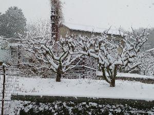 東男・京女 みなさん、おはようございます。 予報とおり起きたら真っ白でした。 家が伏見の丘陵地にあるので、周りは