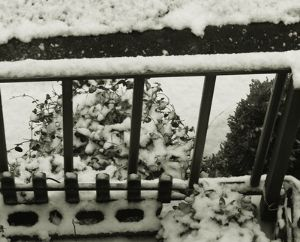 東男・京女 皆さん今晩は 今日は雪降ってません 明日は 良いお天気 枚方迄行ってきます タキイの花やさん 良い花