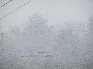 六甲山 今朝の山麓は道路に10cmほどの積雪。 昼にはなくなりましたが 今はかなり強い雪が降っています。 こ