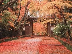 新・詩、随筆、小説などを楽しみたくて * Time tells me  my young love *   The leaves that
