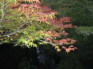 30才未満書き込み禁止! 紅葉スポットの ライトアップが始まっていますが 先週末の京都は まだ色づき始めたばかりでした。 そし