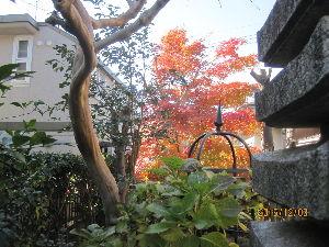 お暇な時間にどうぞ~♪ 次の写真は、昨日の午後1時半頃に撮影した、 我が南庭に彩るモミジです。  この石塔から観たアングルは