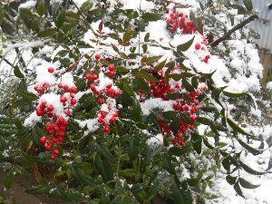 (^◇^)・・・ アハさん・・・(^◇^) 此方 少し 雪がふりました。  もう今日は いらないわ    昨日の剛君の