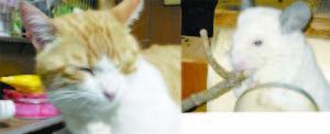 *トットトォトトロ・のチンチラ* 夕べは笑ったぁっ!   実はねぇ、23時頃に猫のキチが『庭に出たいぃ!・・・』  で、出て行ったけど