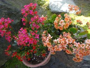 気楽に おいで 春うららと言えるかどうか、暖かくて好い日です つい陽当たりが気持ちよくて庭に出てあれこれ・・・  ス