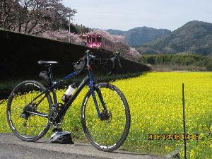 山口県より 先週土曜日(2日)に田布施川の河川敷で、新しい職場主催の花見がありました。 河川敷に桜並木が続いてて